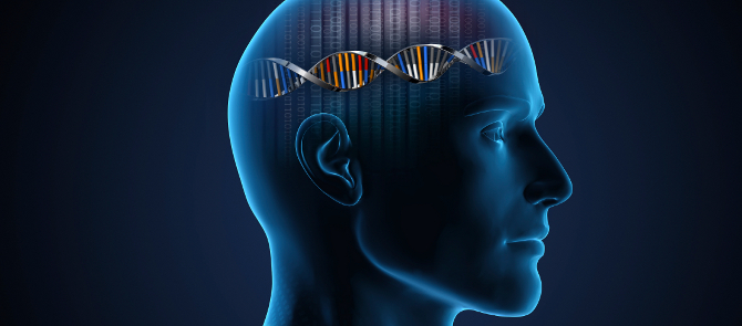 animation of human head with double helix on brain