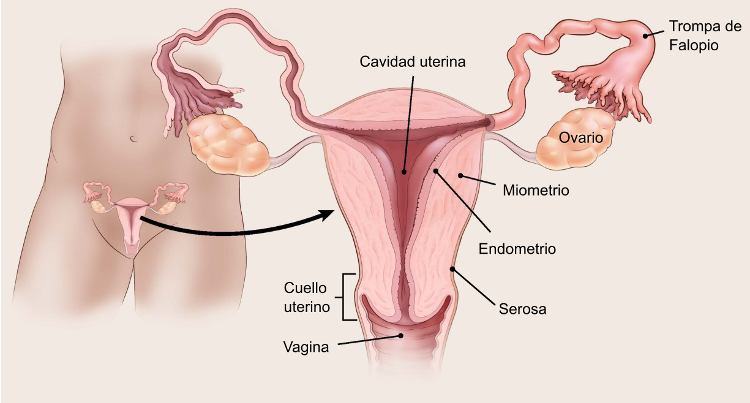 endometriosi dolore ano