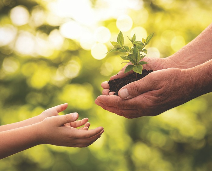Close up of senior hands giving small plant to a child over defocused green background