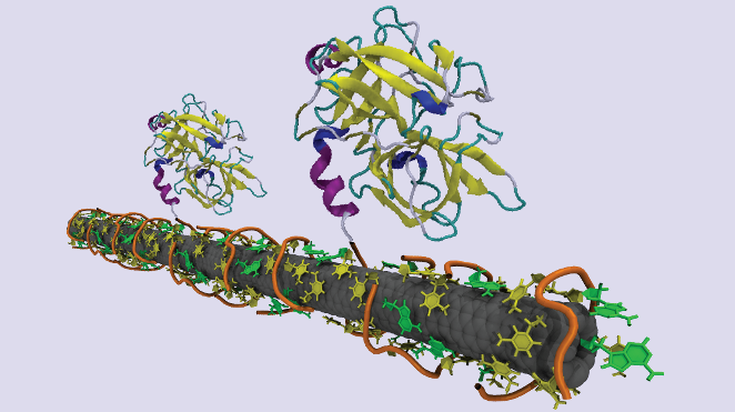illustration of a DNA-wrapped carbon nanotube