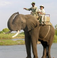 photo of Carol Stevens riding an elephant in Africa