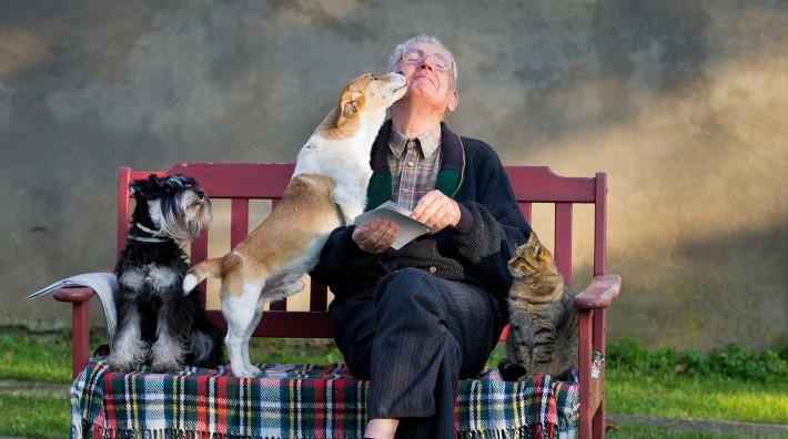 senior man sitting on a park bench with his two dogs and cat